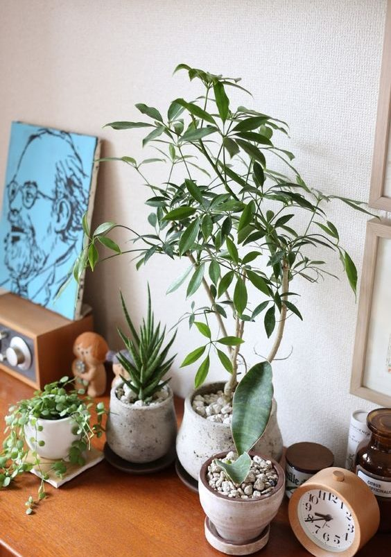 best plants for bedroom