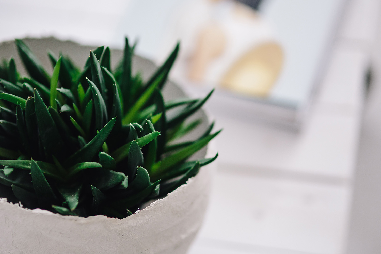 rośliny oczyszczające powietrze